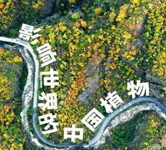 中国植物如何影响了世界?